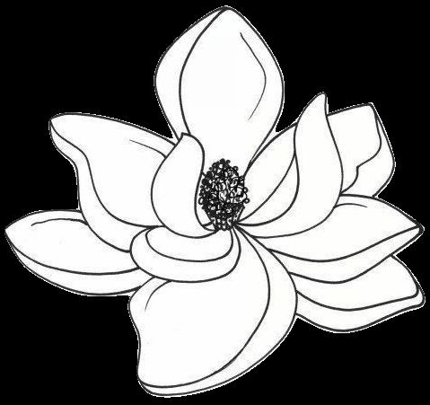 Magnolia Reporting